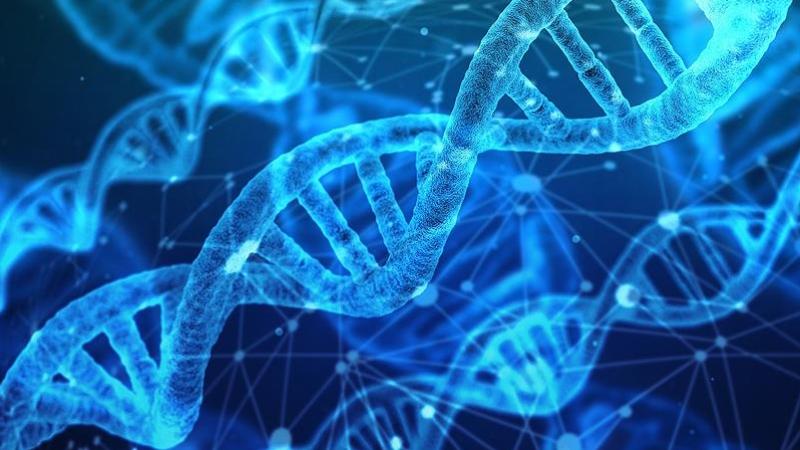 Türk toplumunun genetik kodlarına ışık tutan araştırma sonuçlandı