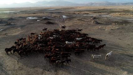Yılkı atlarıyla ünlü Hürmetçi Sazlığı doğa severlerin ilgisini çekiyor
