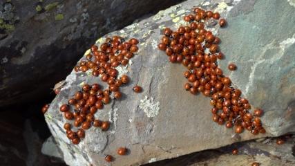 Doğa fotoğrafçıları Uğur Böcekleri Şenliği'nde buluştu