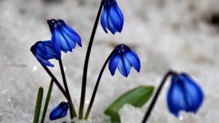 Karların erimeye başladığı Sarıkamış, canlanan doğasıyla cezbediyor