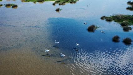 Doğa harikası Hersek Lagünü yazı 235 kuş türüyle karşıladı