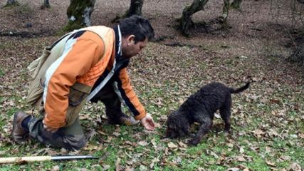 'Arthur', dünyanın en pahalı mantarını avlıyor