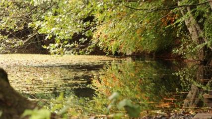 Yedigöller'de sonbahar güzelliği yaşanıyor