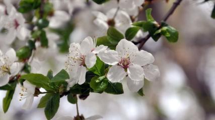 Bayburt'ta ilkbaharla birlikte doğa canlandı