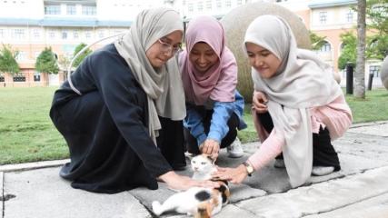 Türklerin kedi sevgisini örnek alıp kedi kulübü kurdular