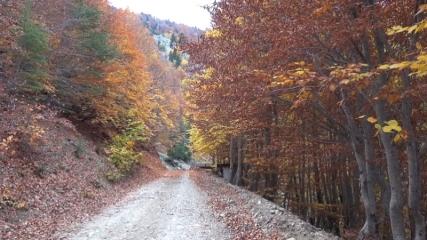 Düldül Dağı sonbaharda göz kamaştırıyor