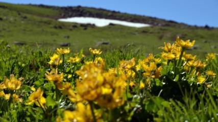 Kars'ta ilkbahar güzelliği yaşanıyor