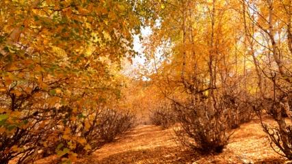 Sarıkamış'ta sonbahar güzelliği