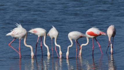 Erçek gölünün renkli misafirleri