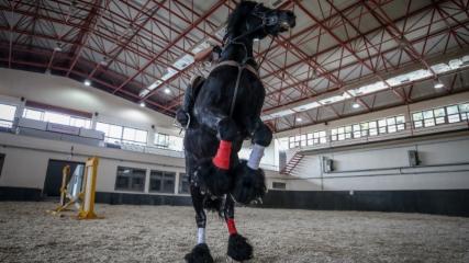 Gemlik atı TSK'nin