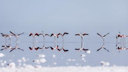 Tuz Gölü uzaklardan gelen konuklarını ağırlıyor