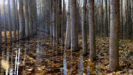 İrem Bağları'nda sonbahar güzelliği
