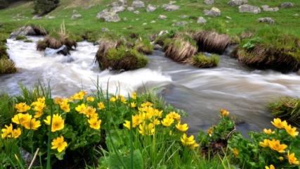 Geç gelen bahar Sarıkamış'ı çiçeklerle süsledi