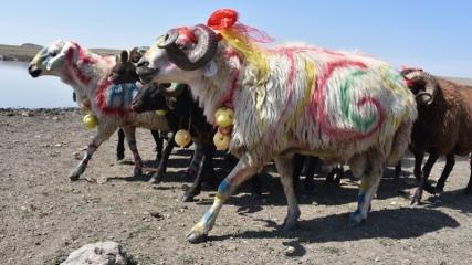Kars'ta yaşatılan asırlık gelenek: Çoban bayramı