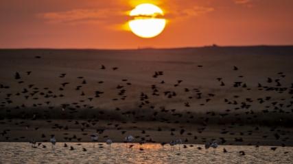 Başkent'in göçmen kuşları