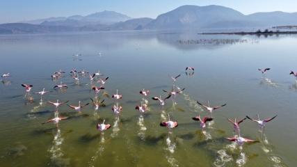 Kuş cenneti Bafa Gölü doğa tutkunlarını cezbediyor