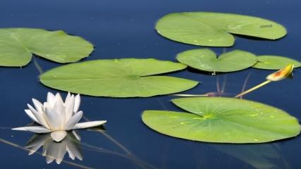 Nilüferleriyle ünlü Işıklı Gölü doğal güzellikleriyle cezbediyor