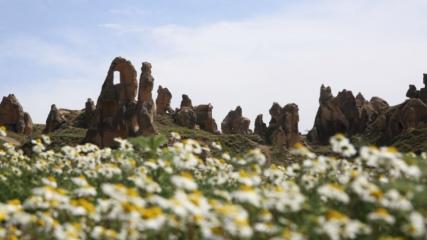 Kapadokya'nın bahar çiçekleri