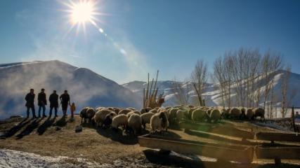 Van'da besicilerin karda zorlu yaşamları