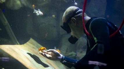 Başkentin akvaryum dalgıcı ziyaretçilerin ilgisini çekiyor