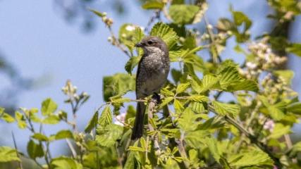 Kızılırmak Deltası 359 kuş türüne ev sahipliği yapıyor