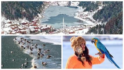 Buz tutan Uzungöl, günübirlik tatilcilerin ilgi odağı oldu